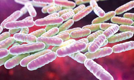 Probiotik: et elastikbegreb, det kræver øvelse at mestre