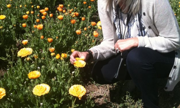 25 år som økologisk pioner
