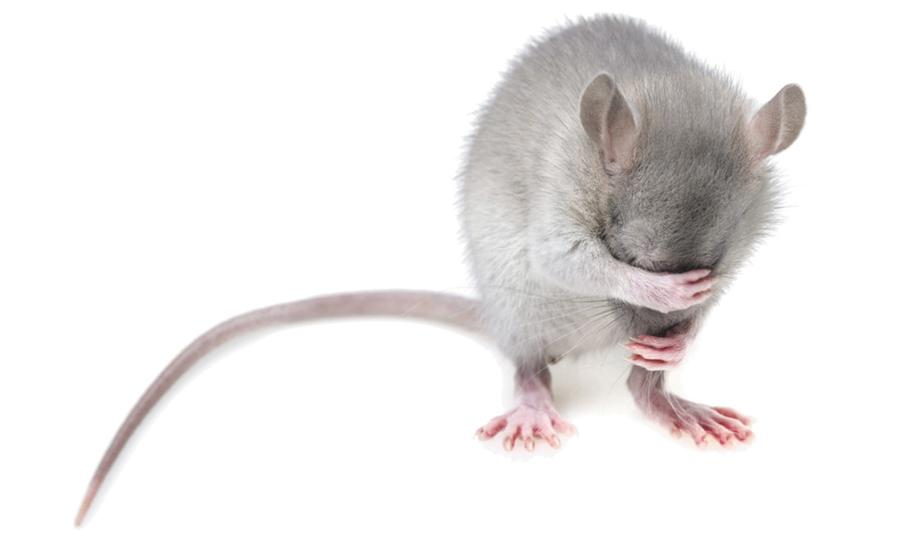 Dyreforsøgskrav i Kina fjernes
